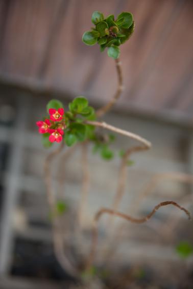 0516flower.jpg