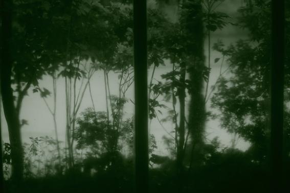 0609green_rain01.JPG