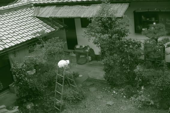 1208shiroyama03.JPG